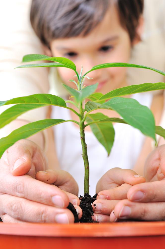 Treeplanting Bitcoin